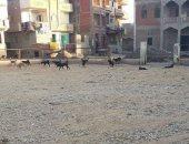 محافظة الجيزة ترد على شكاوى المواطنين حول انتشار الكلاب الضالة