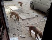 قارئ يشكو انتشار الكلاب الضالة فى وراق العرب