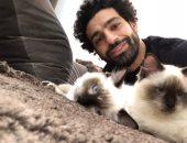 اعرف نوع قطة أبو مكة.. كيف رفض محمد صلاح تصدير الحيوانات؟