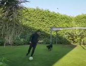 """محمد رمضان يرفض تصدير الكلاب على طريقته الخاصة.. اعرف عمل إيه """"فيديو"""""""