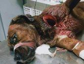 """حبس الجزار المتهم بقتل كلب وإصابة آخر بساطور بعد """"عضه"""" فى الدقى"""