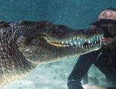 العمر واحد.. مصور يسبح مع التماسيح الضخمة فى المكسيك.. فيديو وصور