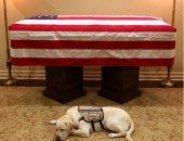 """سر حزن """"سولى"""" كلب جورج بوش الأب بعد وفاته .. صور وفيديو"""