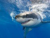 دراسة أسترالية: التغير المناخى يؤثر على طريقة سباحة أسماك القرش