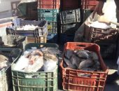 صور.. تموين الأقصر تبيع 900 كيلو سمك للمواطنين بأسعار تبدء من 12 جنية للكيلو