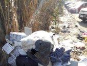 صور.. سحب تراخيص 15 سيارة تحمل بضائع معدة للتهريب فى بورسعيد لمدة 3 أشهر
