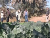 صور.. رئيس مركز الداخلة يتفقد مشروع محطة تنقية المياه وصوب زراعية بالوادى الجديد