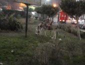 قارئ يرصد سرقة أسوار حديقة عامة وترعى فيها الحيوانات بالعمرانية