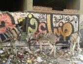 قارئ يشكو انتشار الحيوانات وتراكم القمامة فى ميدان النعام بالمطرية
