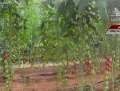 نائب غرفة الخضراوات: مشروع الصوب الزراعية بشرة خير لمصر