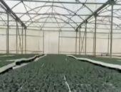 الزراعة: 11 إجراء لزيادة إنتاج صوب الخضراوات ومكافحة الآفات.. تعرف عليها