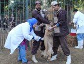 """صور..""""الزراعة"""": حملة تحصينات للغزال بحديقة حيوان الجيزة ضد طاعون المجترات"""