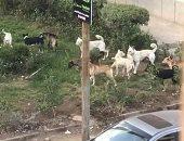 قارئ يشكو انتشار الكلاب الضالة بالشارع الجديد بمدينة السلام