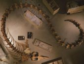 """""""عاشت على الأرض"""".. معلومات غريبة عن الكائنات البحرية فى وادى الحيتان.. صور"""