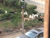 شكوى من انتشار الكلاب الضالة بشارع الجنينة بشبرا