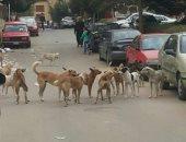 قارئة تشكو انتشار الكلاب الضالة بزهراء مدينة نصر
