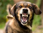 فيديو.. معهد ألمانى يطور أبحاثا عن داء الكلب والإيبولا وحمى الخنازير