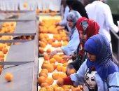 فيديو.. تعرف على جودة المنتجات الزراعية المصرية