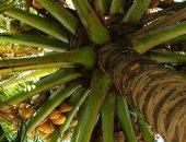 مزارع أمريكى يعرض شجرة تنتج 40 نوعا من الفاكهة