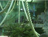 صور.. حديقة حيوان موسكو توزع بقايا أشجار عيد الميلاد على الحيوانات.. يا ترى ليه؟
