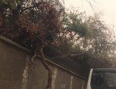 """قارئ يحذر من سقوط """"شجرة"""" بشارع وزارة الزراعة بالدقى"""
