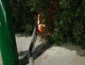 قارئ يبلغ عن سقوط إشارة مرورية مضيئة وسط الأشجار بمنطقة الكوثر فى الغردقة