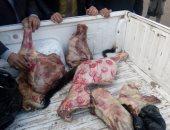 """""""صور"""".. الزراعة: ضبط 106 أطنان لحوم فاسدة فى حملات تفتيش بـ 22 محافظة"""