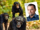 """""""الشمبانزى فى تنزانيا"""".. قضية جديدة تشغل ليوناردو دى كابريو """"فيديو وصور"""""""