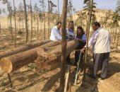 صور.. قصة إنتاج أول لوح ابلاكاج صناعة مصرية 100% من شجرة مصرية