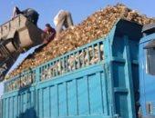 صور.. بشاير الخير.. زيادة مساحات الأراضى المنزرعة بنجر سكر إلى 610 آلاف فدان