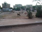 قارئ يشكو من انتشار الكلاب الضالة بشارع القومية العربية فى إمبابة