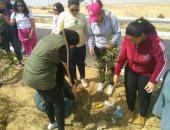 طلاب جامعة أسوان يزرعون 100 شجرة بمشاركة 200 طالب