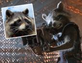 """وفاة حارس المجرة.. تعرف على """"أوريو"""" أشهر حيوان راكون فى هوليود ..صور"""