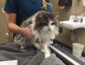 صور.. رحلة انقاذ قطة قبل نفوقها بعد تجمدها بسبب الموجات الثلجية بأمريكا