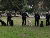 كشف عن المتفجرات والمخدرات والبحث أسفل الأنقاض خلال عروض الكلاب البوليسية