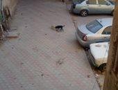 استمرار شكاوى الموطنين من انتشار الكلاب الضالة بمنطقة العباسية