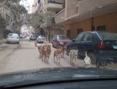 شكوى من انتشار الكلاب الضالة بشارع الزهور فى البساتين