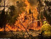 """""""ملحمة كبيرة"""".. شاهد رجال الإطفاء يواجهون النيران فى غابات أستراليا"""