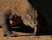 اكتشاف حيوان من زواحف ما قبل التاريخ وسط الصين