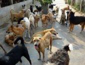 """""""الخدمات البيطرية"""": تحصين 692 كلبًا واستخراج 543 رخصة خلال 30 يوما"""