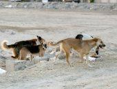 شكوى من انتشار الكلاب الضالة فى أرض البحر والكونيسة بمحافظة الجيزة