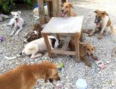 شكوى من انتشار الكلاب الضالة بقرية الطرفاية بالبدرشين
