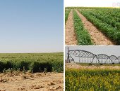 """ترشيدًا للاستهلاك.. مرحلة جديدة لتطوير الرى الحقلى بالأراضى القديمة.. """"الزراعة"""" تلجأ لمنظومة تسوية التربة بالليزر والاستعانة بزراعة المصاطب والأصناف المبكرة لتوفير المياه والوقود.. وحملات للتعريف بالمشروع"""