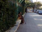 قارئ يشارك بصورة مسنة بمصر الجديدة.. ويؤكد: تحتاج مساعدة فورية