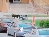 بقوة القانون.. فيديو لأمن مدينتي يصادر الكلاب الشرسة بعد واقعة الطفل محمد إيهاب
