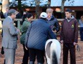 صور.. الأمير هارى وميجان ماركل يزوران النادى الملكى للفروسية فى المغرب
