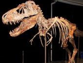 اكتشاف حفريات نادرة لديناصورات عمرها 70 مليون عام شرقى الصين