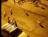 أهالى مساكن ضباط الصف بمدينة السلام يشكون من انتشار الكلاب الضالة