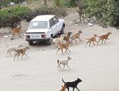 بيطرى القليوبية: 1050 حملة لمواجهة الكلاب الضالة