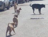 شكوى من انتشار الكلاب الضالة والقمامة بنهاية شارع مصطفى النحاس